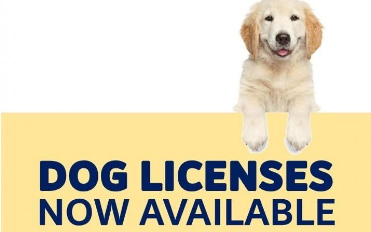 Dog licenses available